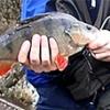 Wklejanka Dragon Fishmaker - ostatni post przez Haczyk_Dawido
